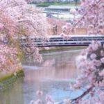 大岡川の桜祭り 2019年!駐車場やアクセス情報はココ!